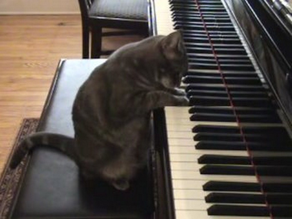 chat melomane piano1024